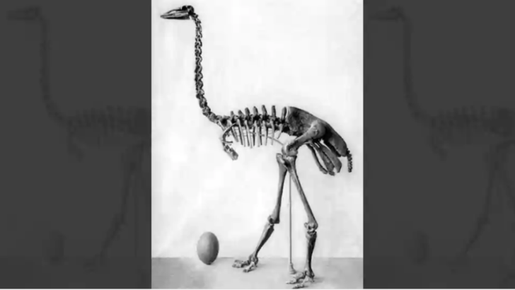 Scientists finally decide on world's 'largest bird'. And it is extinct