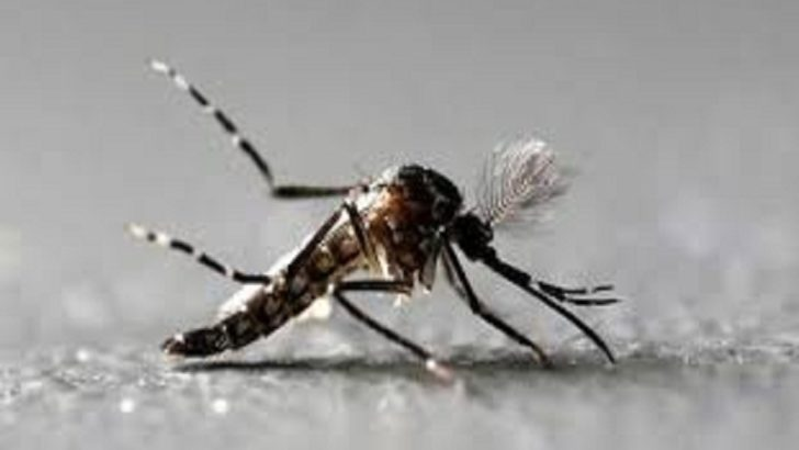 29 zika cases in Jaipur, outbreak remains localised, says Centre