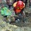 Landslide kills four in Ctg