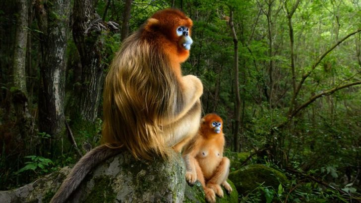Wildlife Photographer of the Year: Gazing monkeys image wins
