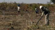 Landmines new scourge in war-torn Yemen