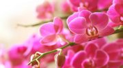 Choose flowering plants that show off their beauty in winter